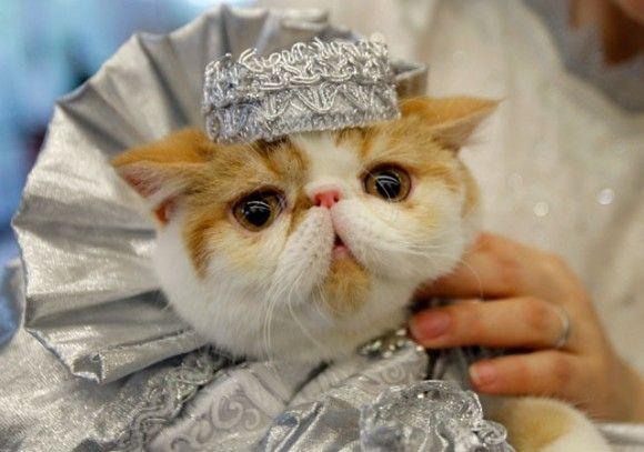 11 Cats in Halloween Costumes Pinterest Halloween costumes - cute cat halloween costume ideas