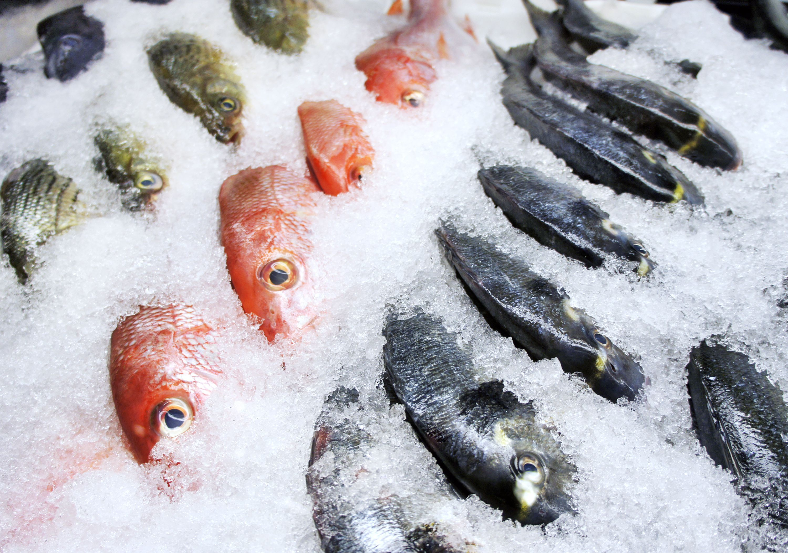 Things You Didn T Know About Freezing Fish Fish Fish Wrap Frozen