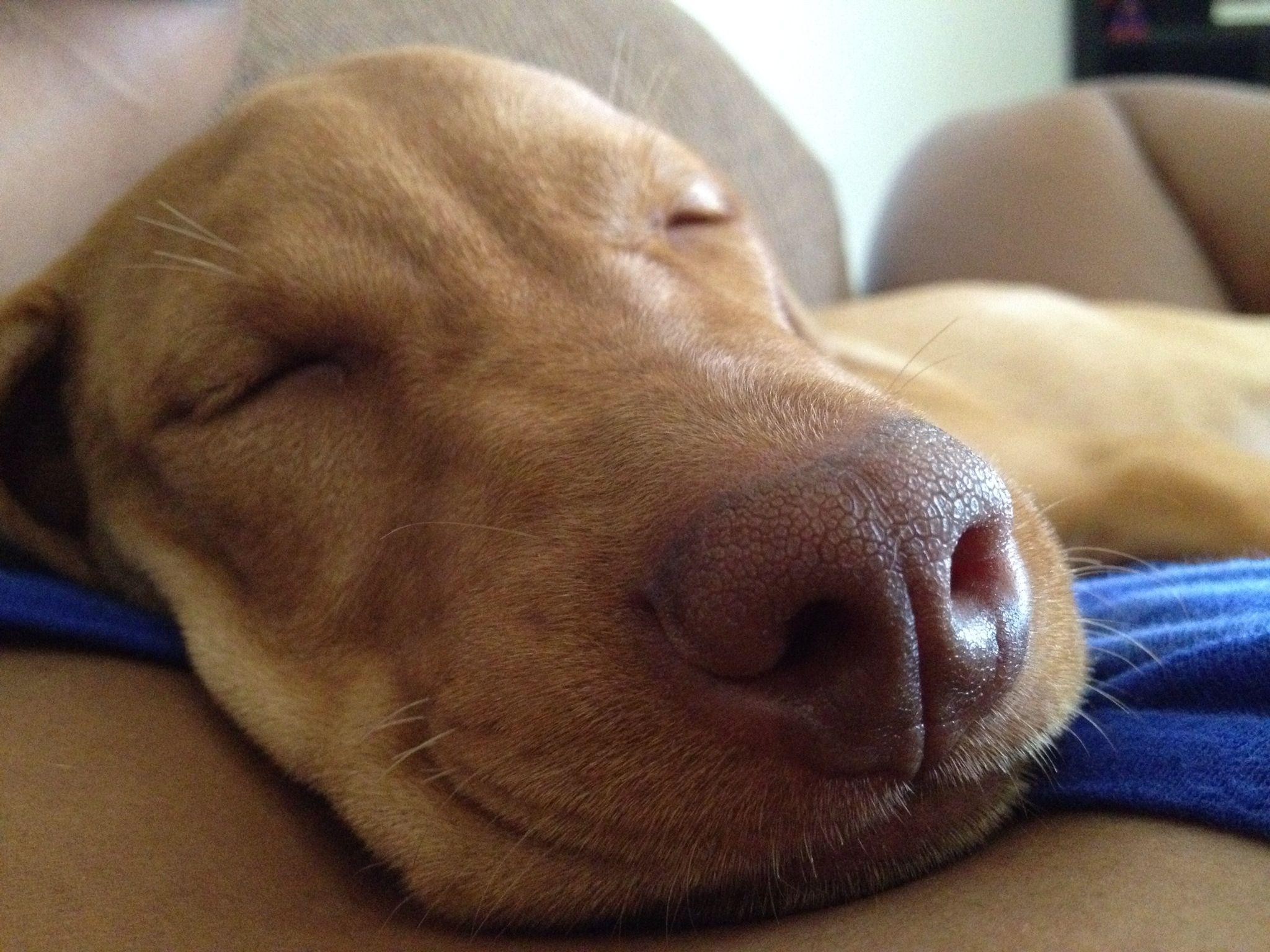 lazy doggy style