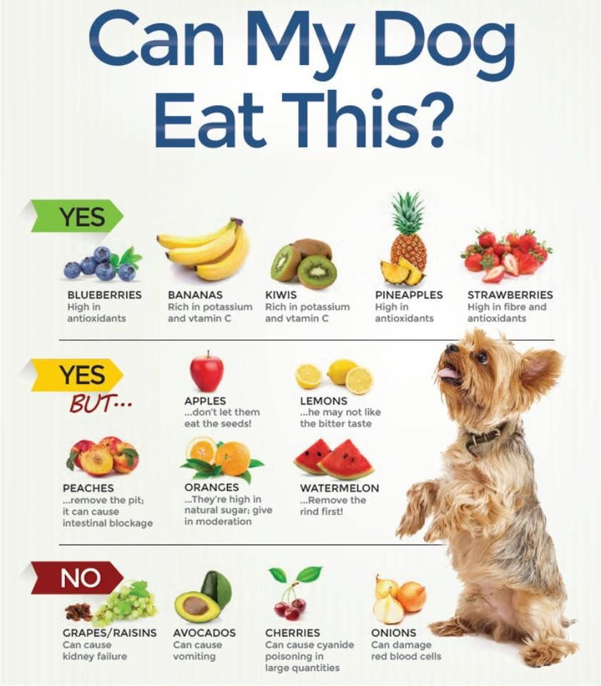 Can my dog eat this foods dogs can eat dog food