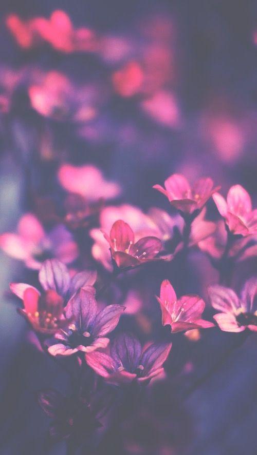 Alternative Background Flowers Heart Inspiration Iphone