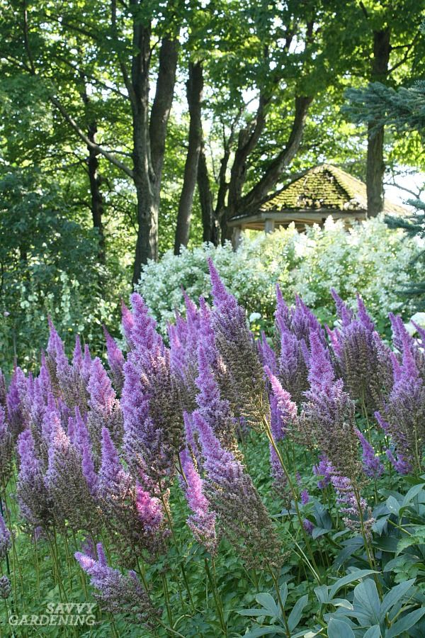 Shade loving perennial flowers 15 beautiful choices for your garden flowering shade perennials include these top favorites mightylinksfo