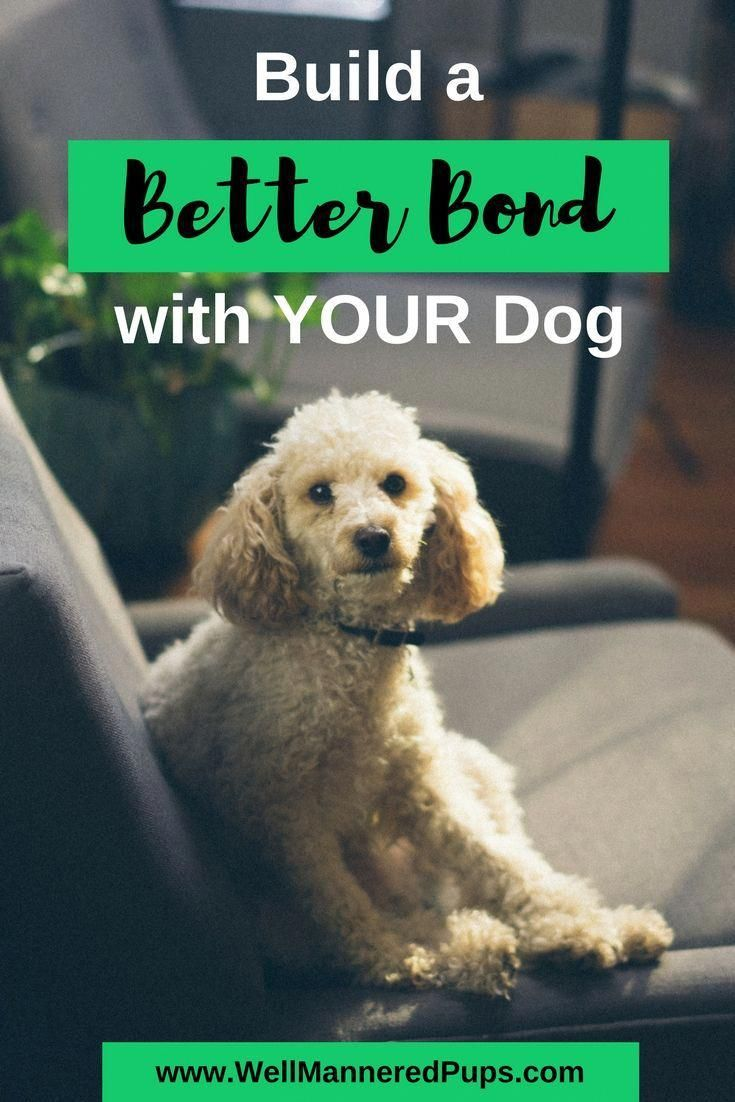 Do you want to build a better bond with you dog? Here are