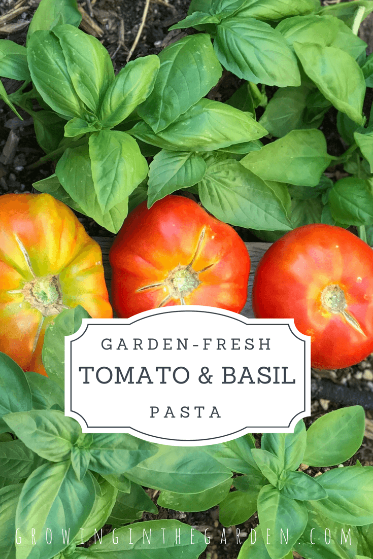Garden Fresh Tomato and Basil Pasta is part of Starting A Home garden - Garden fresh tomato and basil pasta comes together quickly and you can't beat the flavor of homegrown tomatoes and basil!