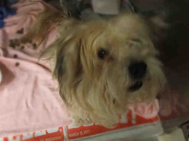 St Louis Pet Adoption Humane Society Pet Adoption Dog Adoption
