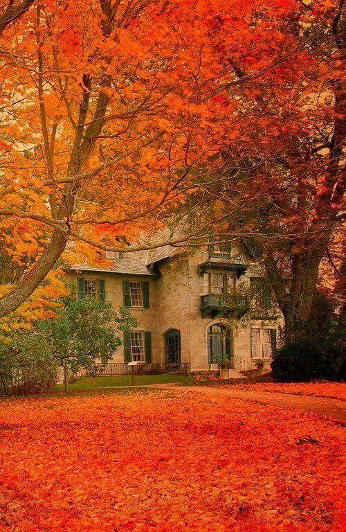 Beautiful Autumn Sunset: Autumn Scenery