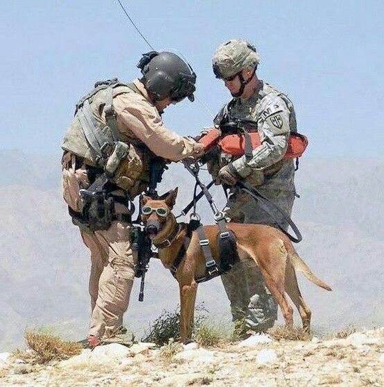 Herz On Watch Dogs