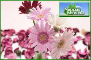 Nasa Recomenda Estas 12 Plantas para Purificar o Ar da Nossa Casa