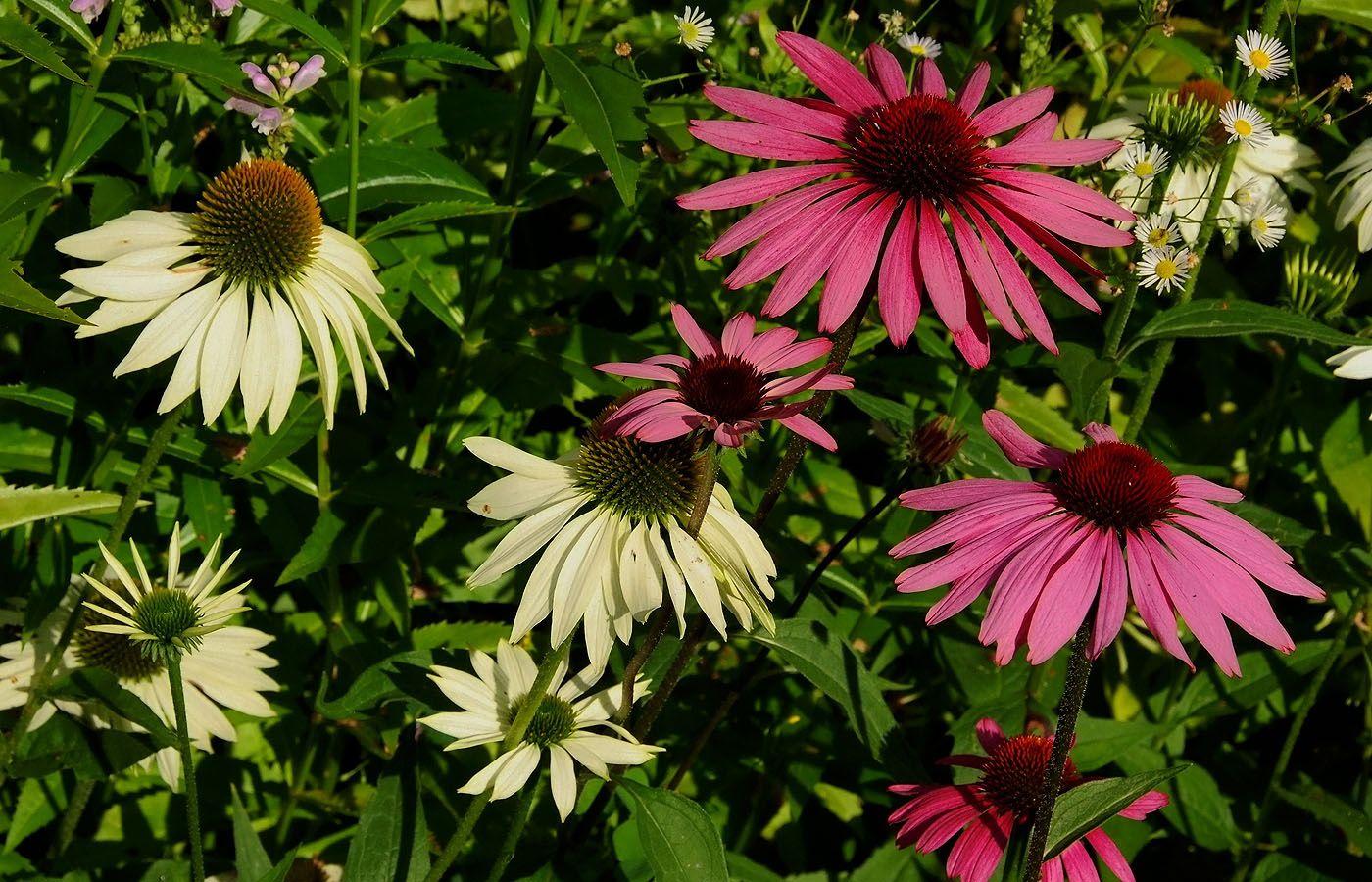 Suche ich den Sonnenschein, ...  und habe keine Zeit, geh ich in meinen Garten, denn der ist gar nicht weit. :-)