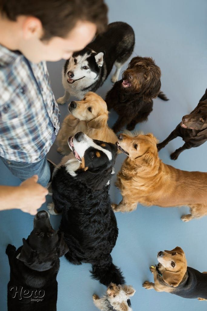 Dogs Looking Up At Smiling Dog Daycare Owner By Hero Images Dog