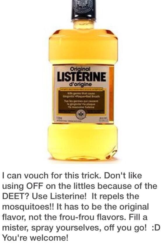 Listerine as bug spray | Listerine, Camping hacks, Camping fun