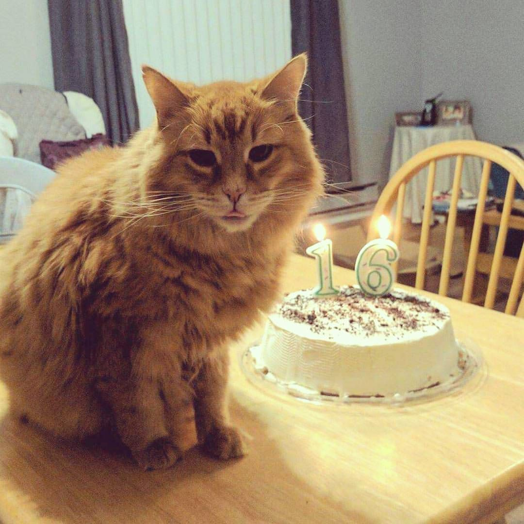 It's his 16th birthday today. http://ift.tt/2iBhpja