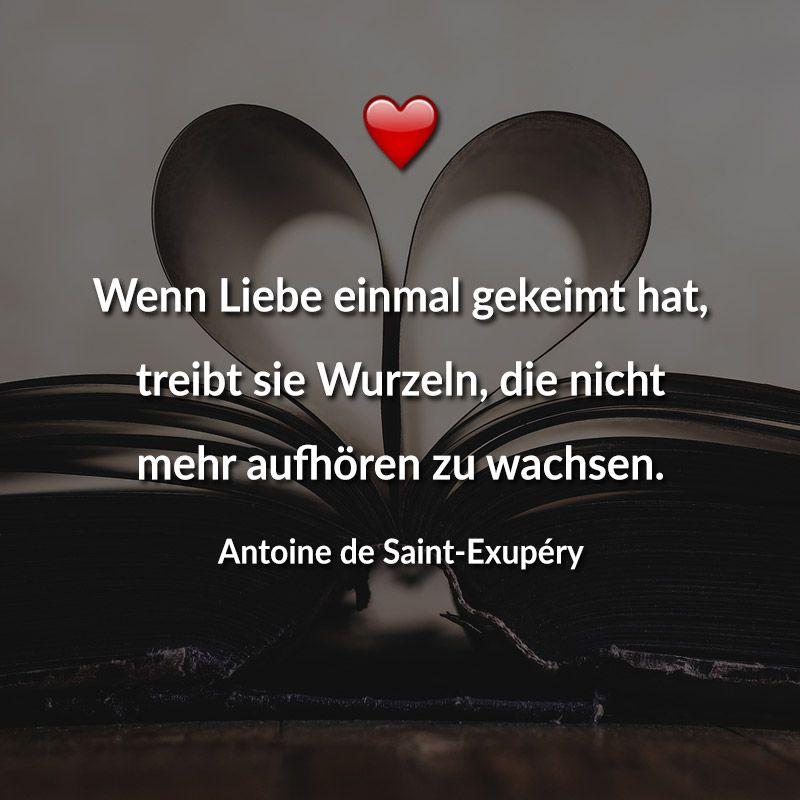 """""""Wenn Liebe einmal gekeimt hat, treibt sie Wurzeln, die nicht mehr aufhören zu wachsen. (Antoine de Saint-Exupéry)"""" Weitere schöne Valentinstagssprüche gibt es auf Mein-wahres-Ich.de!"""
