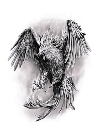 Resultado De Imagem Para Desenho De Fenix Tatuagem Phoenix