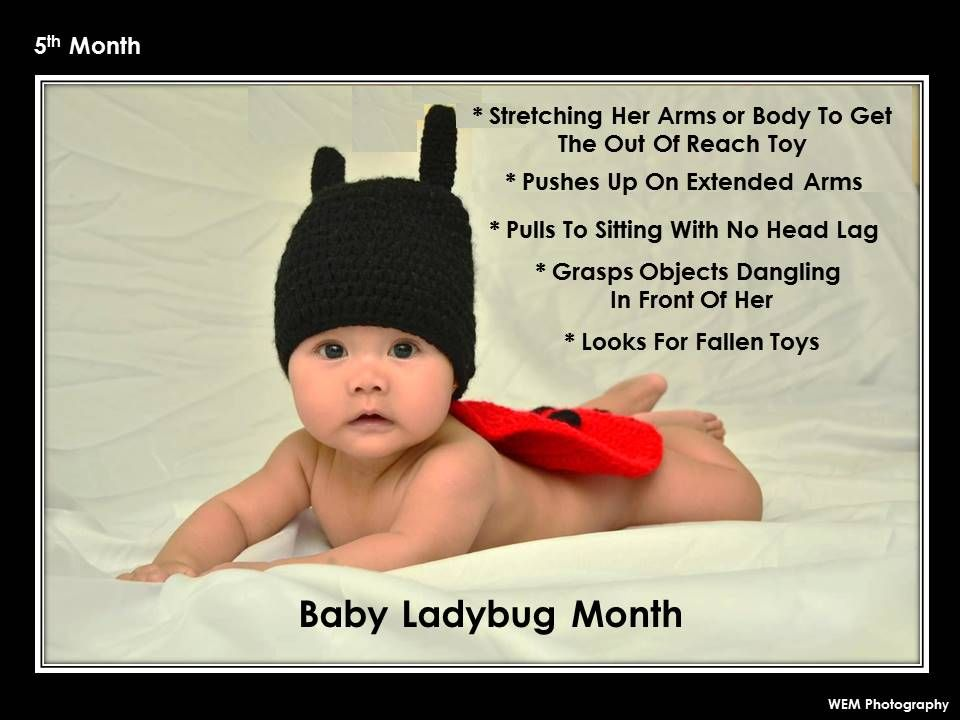 5th Month: Baby Ladybug Month | Baby ladybug, Baby ...