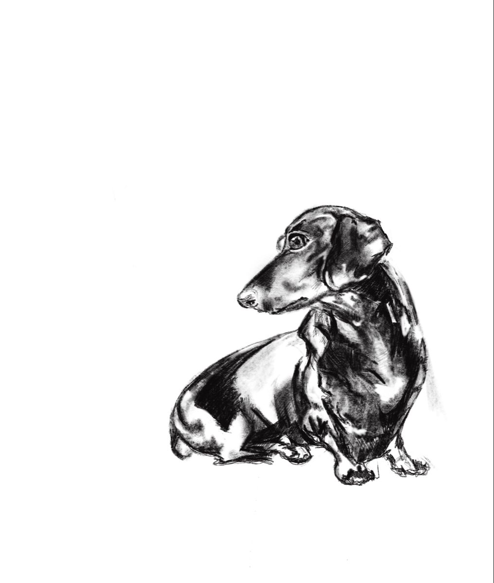 Dachshund Doggy In 2020 Dachshund Animal Tattoo Digital Drawing