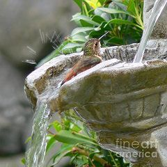 Hummingbirds Do Take Baths by Jennie Marie Schell