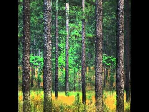▶ Daily Planet Ambient Mode: Longleaf Pine - YouTube