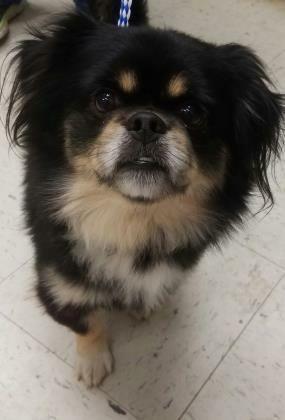 Adopt Mason On Dogs Pets Dog Training