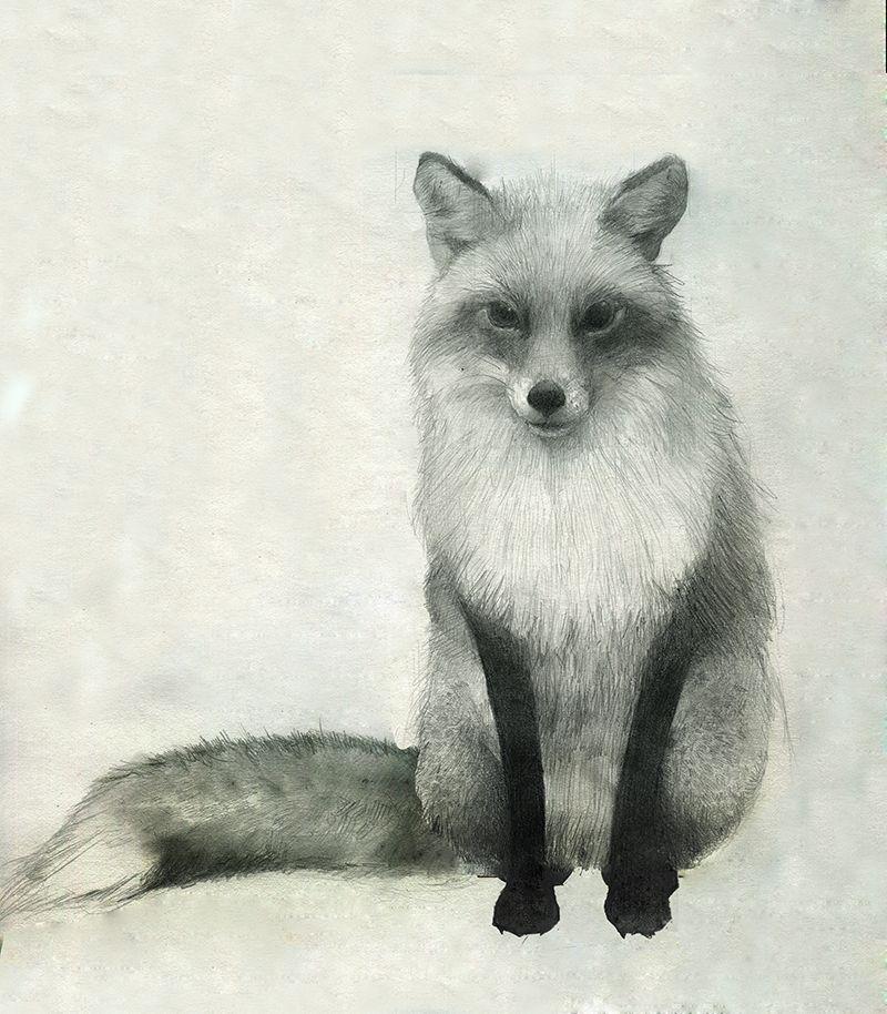 Red Fox Drawning o … Animal drawings, Fox drawing, Fox