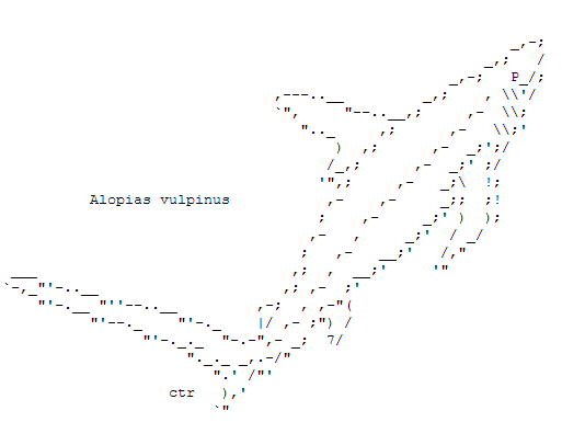 Sharks in ASCII Text Art | computer art | Art, Text message
