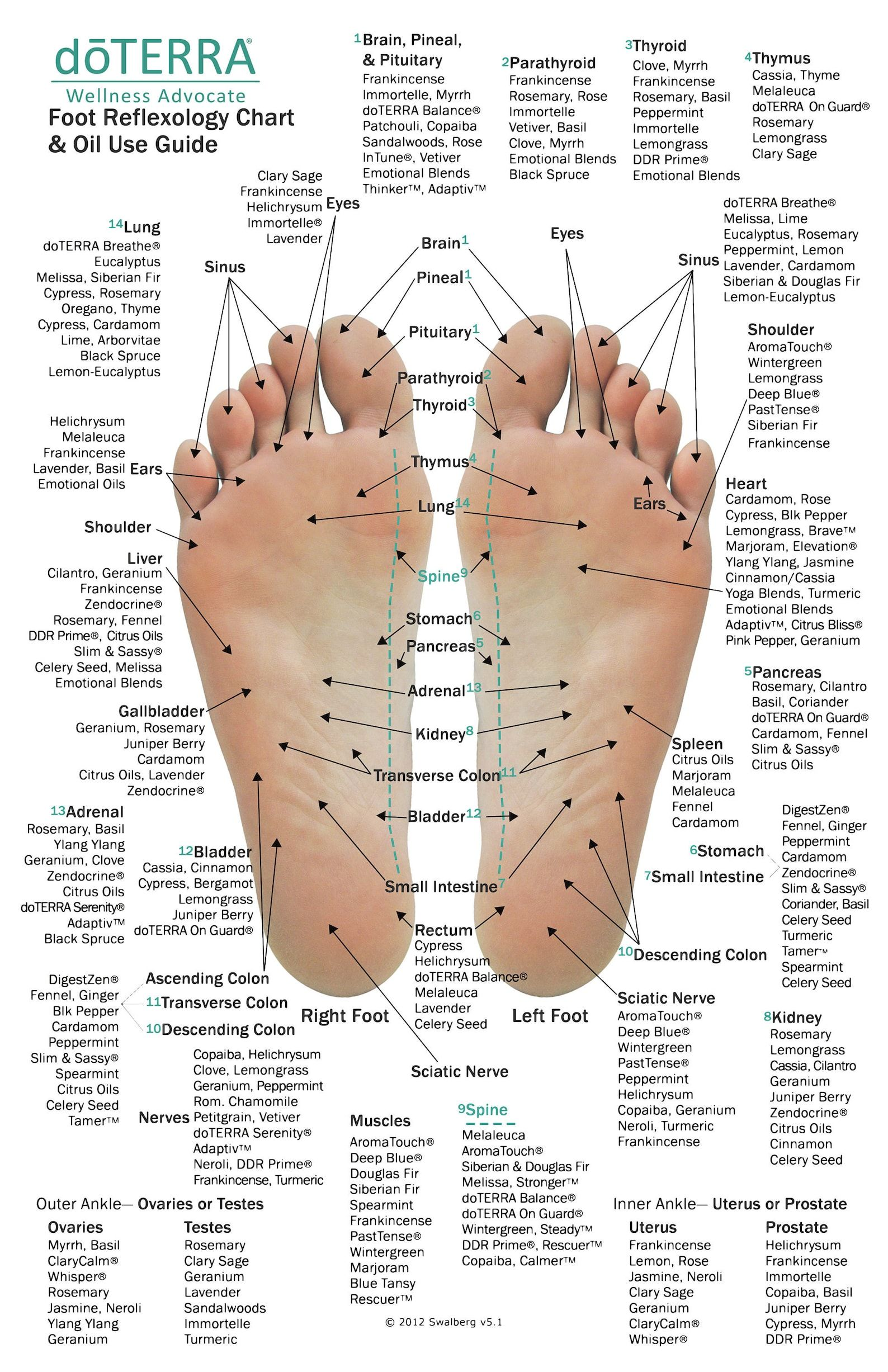 10 Pack - MINI Essential Oil Reflexology Chart & O