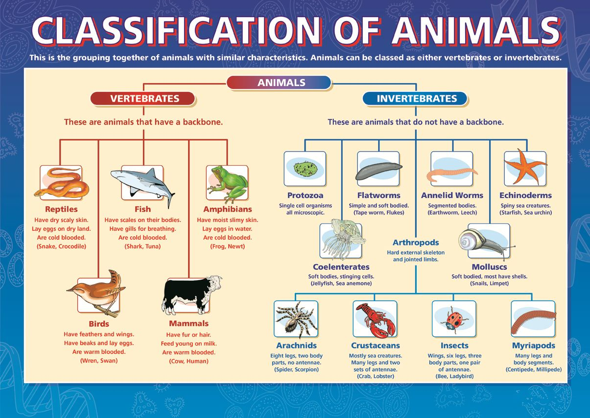 Classification of Animals, Dicotomous Key, Taxonomy ...