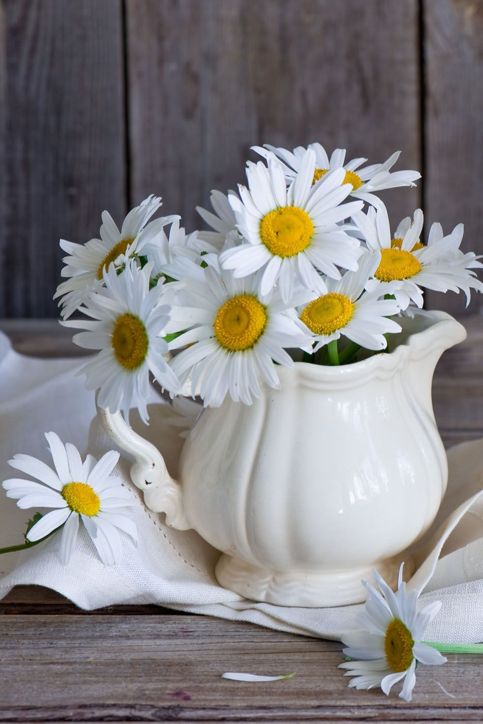 Pin by jessica myers on daisy fave flower | Pinterest | Flowers ...