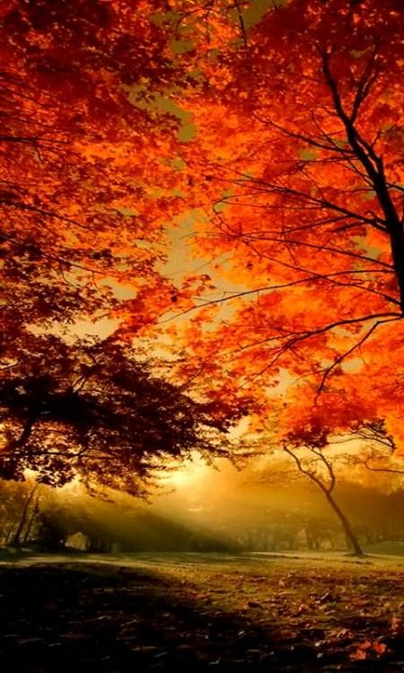 Android Autumn Wallpaper : android, autumn, wallpaper, Autumn, Morning, Scenery,, Beautiful, Nature,, Landscape, Wallpaper