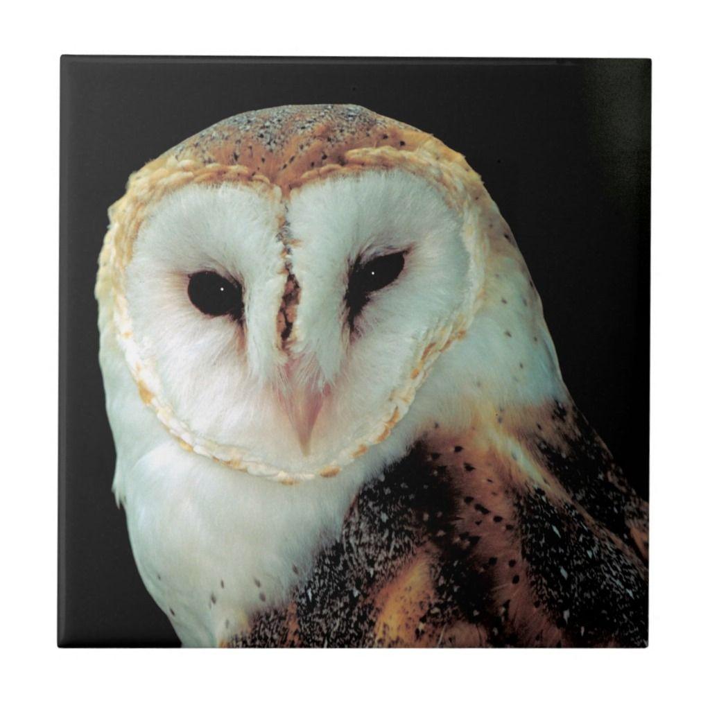 Face of Barn Owl Photo Ceramic Tile   Zazzle.com in 2020 ...