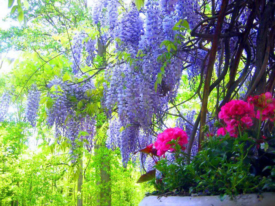 Cosas Para Photoscape Flores Y Plantas Arboles Ps: Paisajes Con Flores Naturales