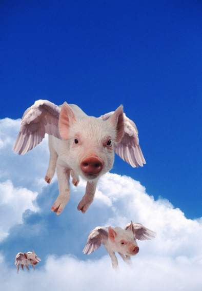 when pigs fly picture country cards virtual greetings cards birthday cards christmas cards