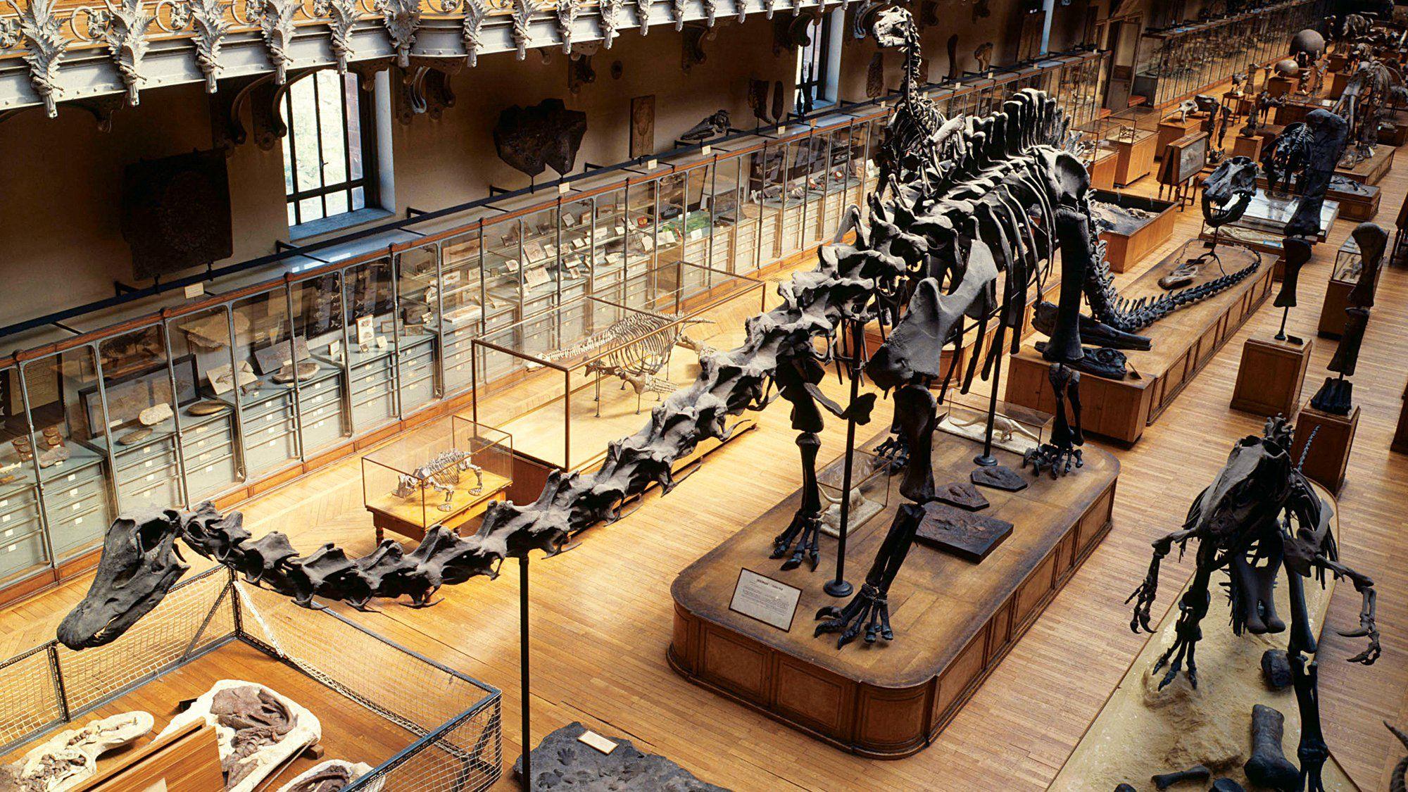 Découvrir les dinosaures du Museum National d'histoire naturelle