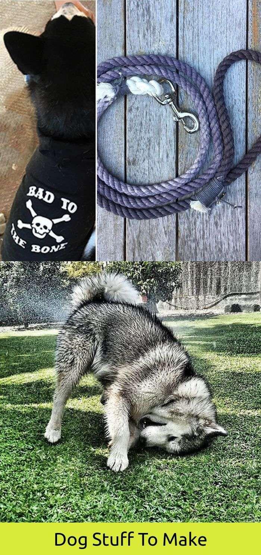 Dog Funny Ring Short Dog Quotes Unusual Dog Breeds Dogs Dog