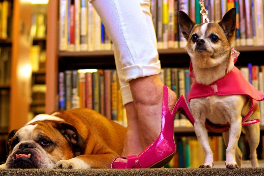 Bristol Dogs Wanted For Legally Blonde Audition Dogs Animals