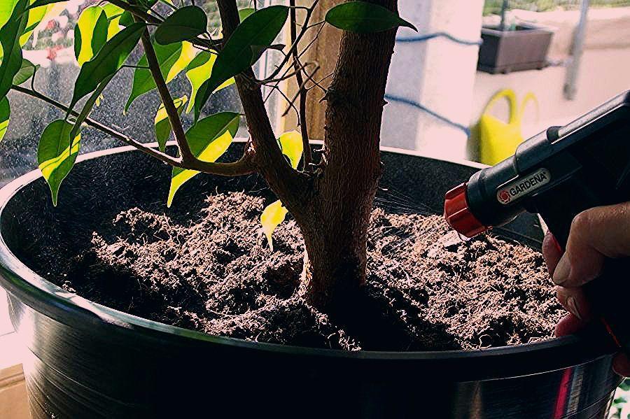 Gemüse Im Garten Anbauen