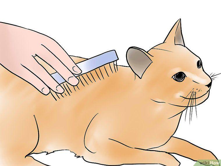 Get rid of possums aggressive animals animals pikachu