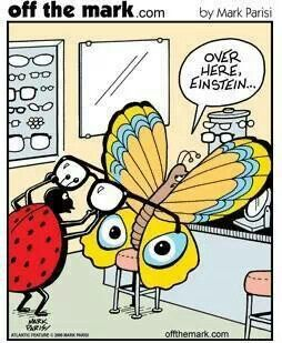 Butterfly Eyes Mark Parisi Eye Jokes Optometry Humor Butterfly Eyes