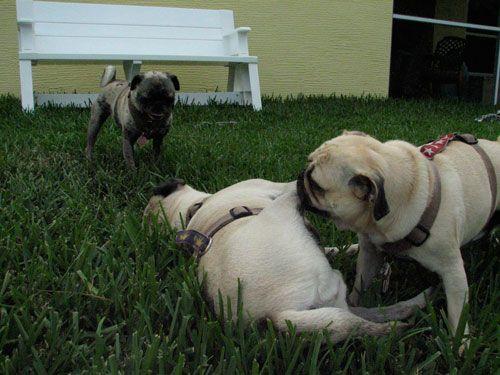Henry, Benjamin and Luna