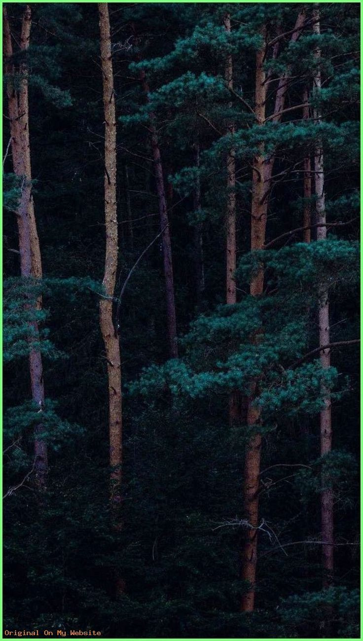 Wallpaper Iphone Tree Forest Iphone Wallpaper