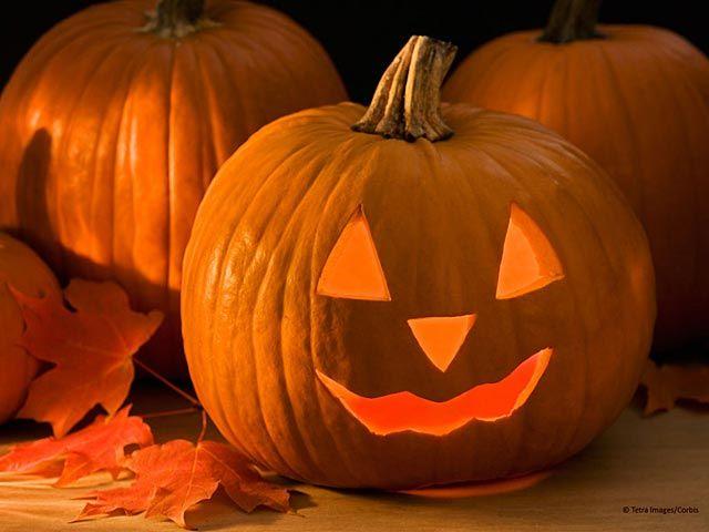 Halloween Pumpkin Wallpapers Free Software Download Freeze Pumpkin Carving Halloween Pumpkins Pumpkin Wallpaper