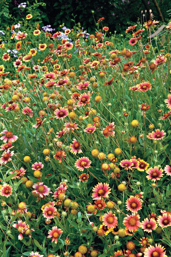 10 Plants That Beat The Summer Heat Cut Flowers