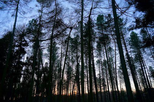 Pettypool Woods Cheshire, UK