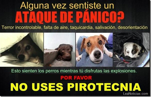 Asi Sufre Tu Mascota Con Los Fuegos Artificiales Animals Animal Abuse Animal Protection