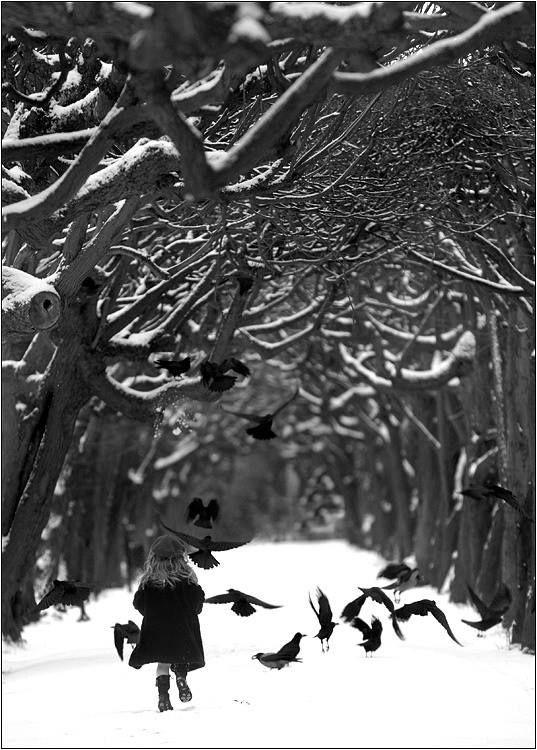 Pin By Natalya Kovalchuk On Ravens White Photography Black Bird Photography