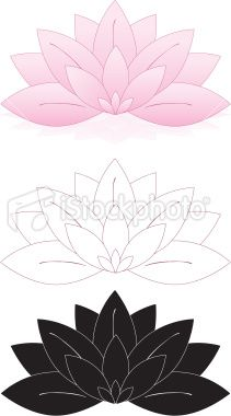 Lotus Flowers, Water Lilies Set (Pink, White, Black) Royalty Free Stock Vector Art Illustration