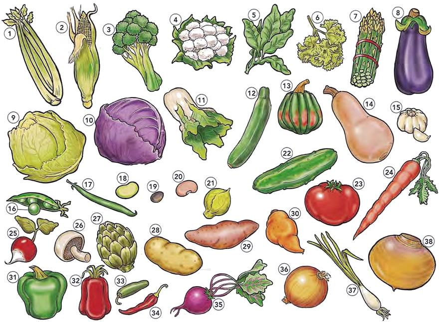 Vegetables list English vocabulary PDF Vegetable