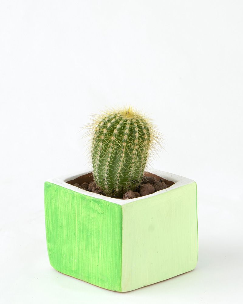 SQUARE POT [S]  GREEN / MINT GREEN