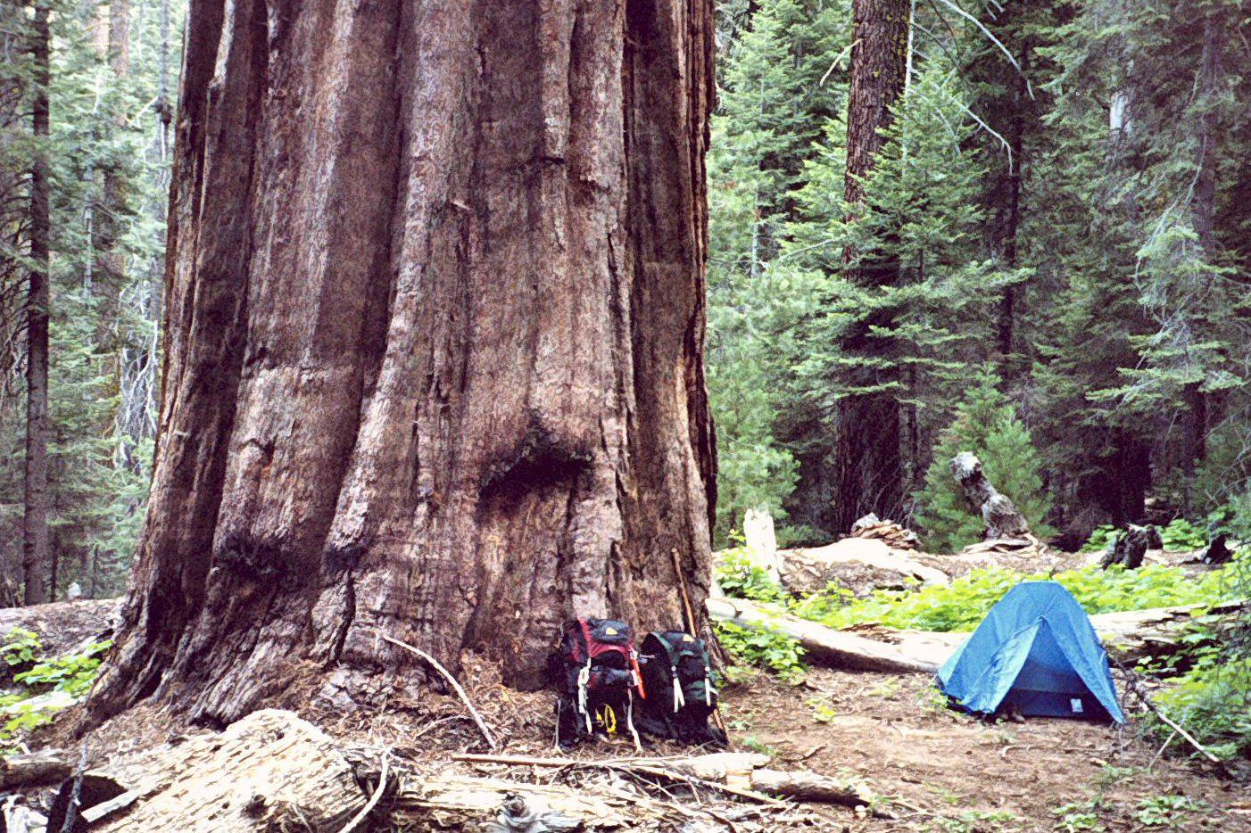 Kings Canyon, camping, tent backpacking, redwoods