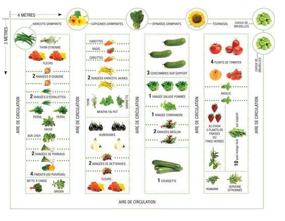Comment placer vos légumes dans votre potager ?